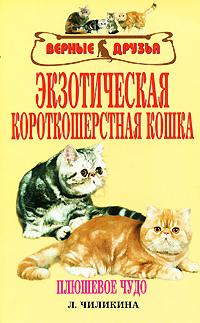 Л. А. Чиликина Экзотическая короткошерстная кошка экзотическая короткошерстная кошка цена в новосибирске