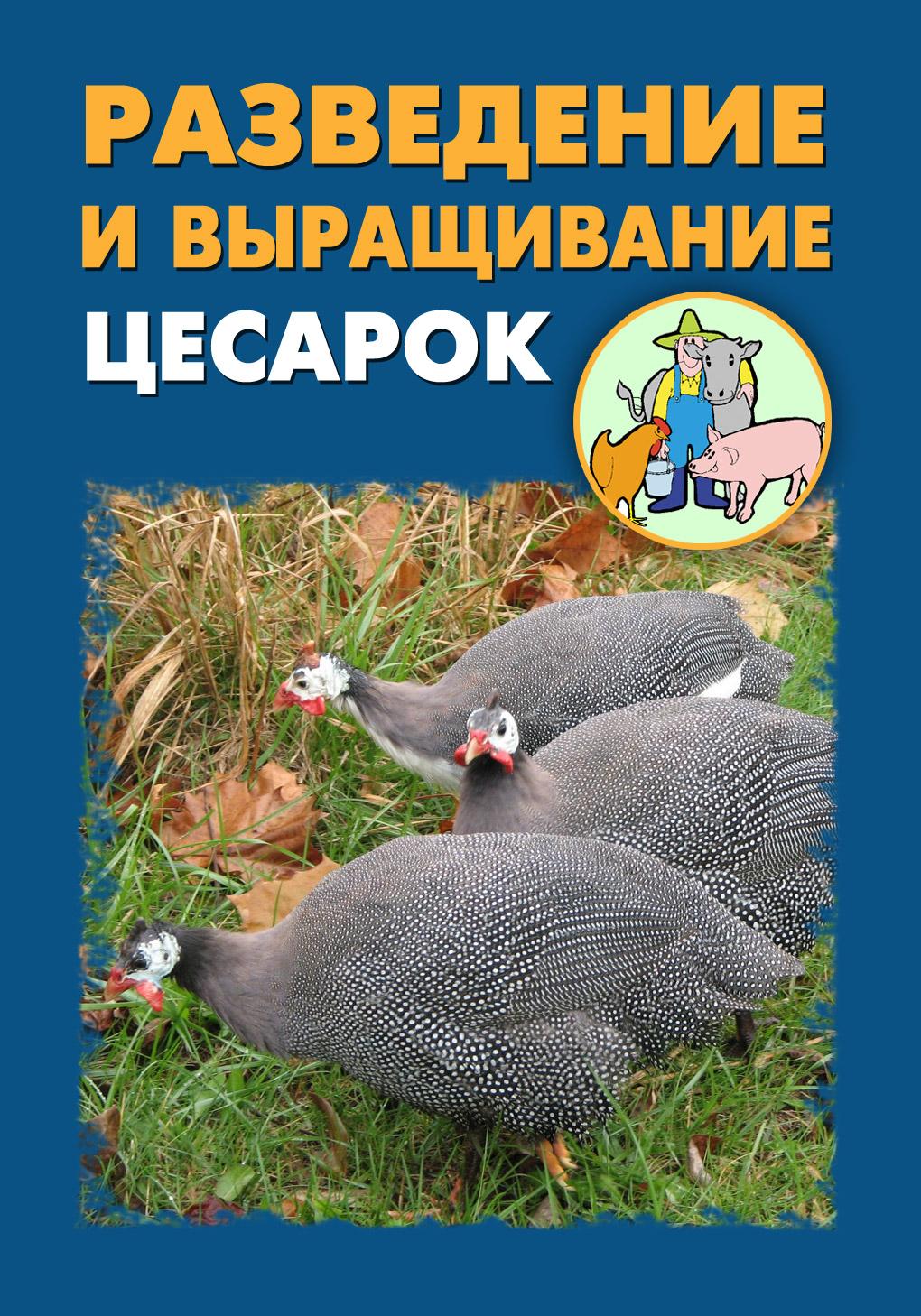 цена Илья Мельников Разведение и выращивание цесарок