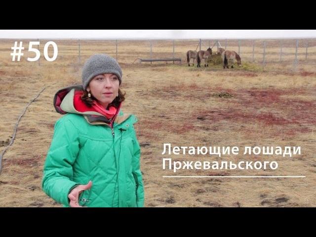 Евгения Тимонова Летающие лошади Пржевальского