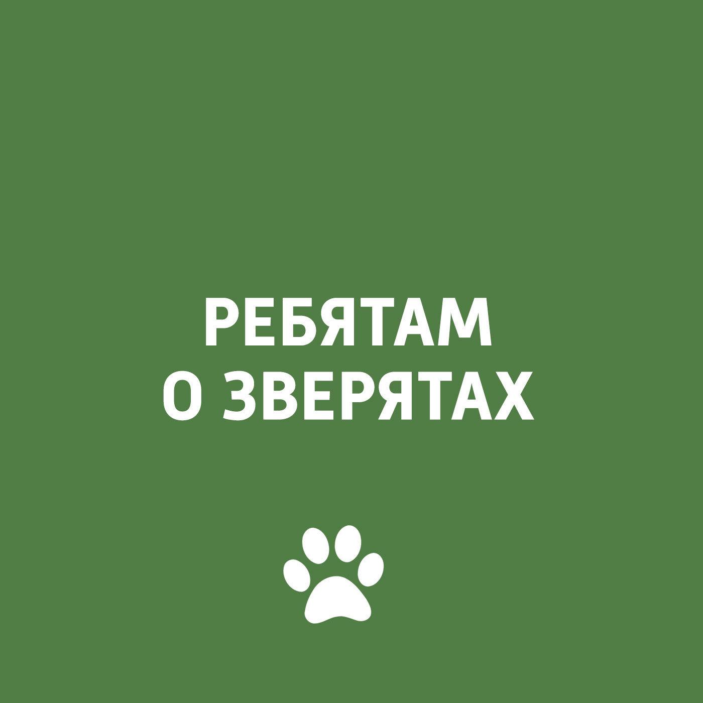 Творческий коллектив программы «Пора домой» Врач-ветеринар в студии цена в Москве и Питере