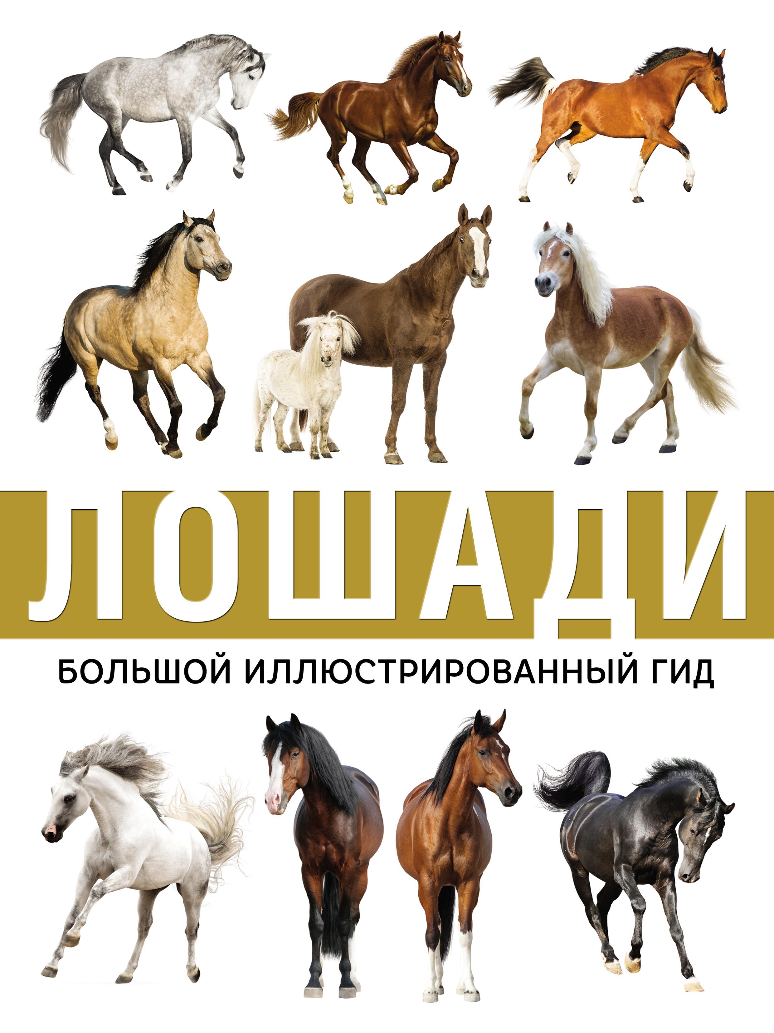 Фото - А. А. Спектор Лошади спектор анна артуровна лошади иллюстрированный гид