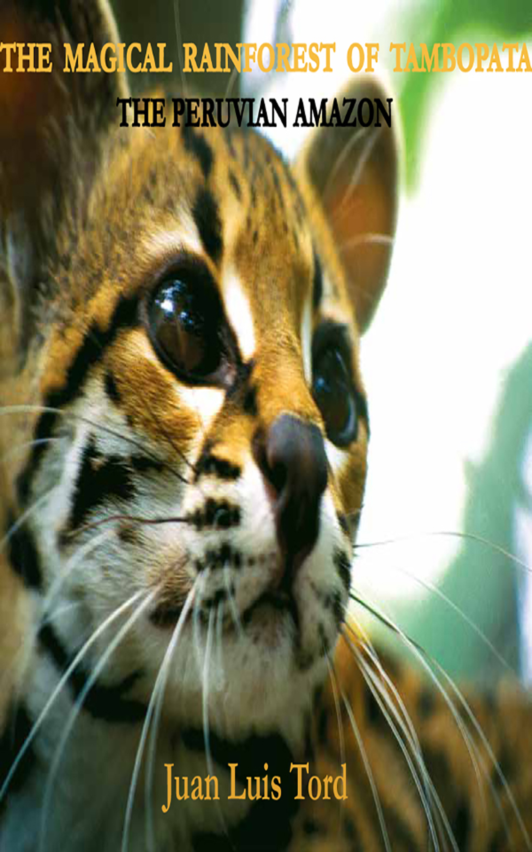 Juan Luis Tord The magical rainforest of Tambopata: The peruvian Amazon the amazon rainforest 2 reader книга для чтения