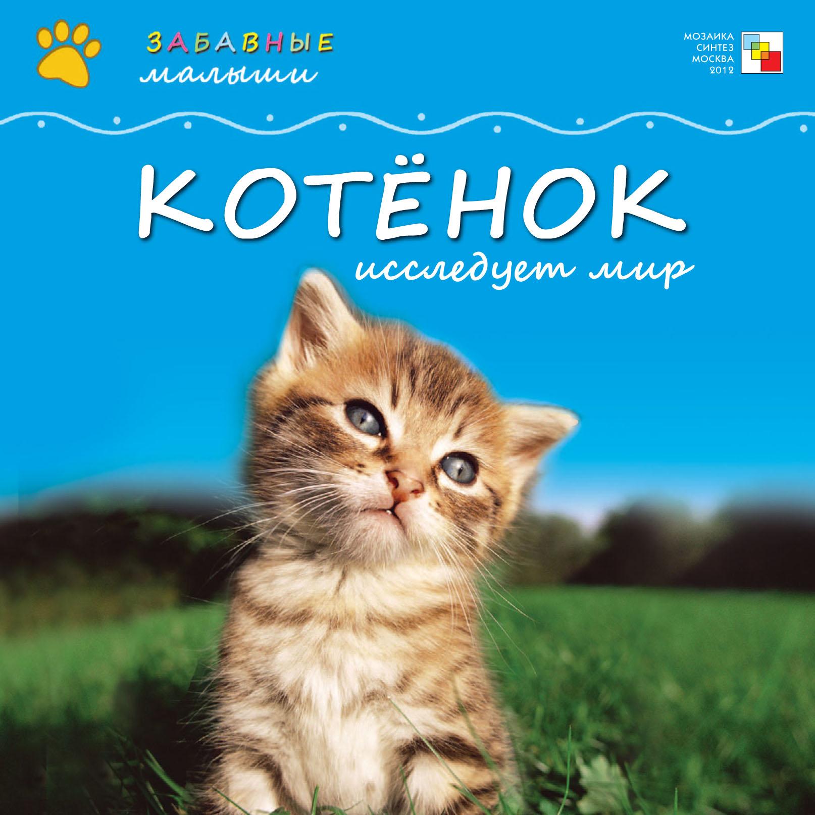 Котёнок исследует мир