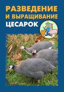 Разведение и выращивание цесарок