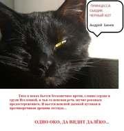 Принцесса, сыщик и черный кот