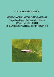 Кривоусые крохотки-моли (Lepidoptera, Bucculatricidae) фауны России и сопредельных территорий